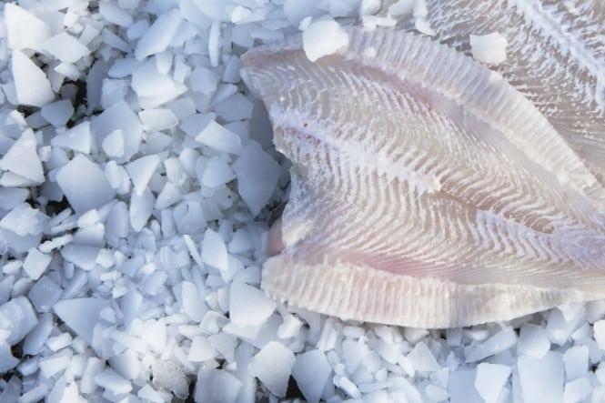 Ugens fisk: Rødspætte