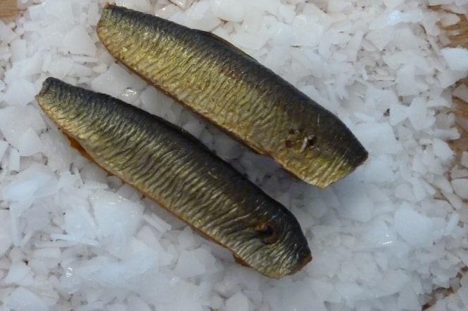 Ugens fisk: Sild